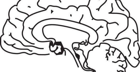 Rodzaje guzów mózgu