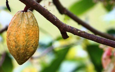 Wpływ flawonoidów na powstanie i rozwój raka jelita grubego
